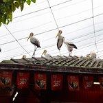 Yellow-billed storks were a-plenty