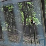 Great Hornbill in its enclosure