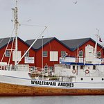 Boat MS Reine at Andenes fishing port