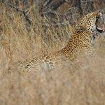 Photo of Kruger National Park