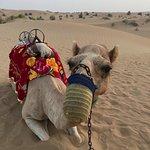 Mr. Camel