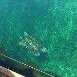 Foto de Oceanografic Valencia