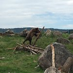 Bella was working hard to destroy that log