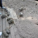 You can feed the meerkats all up close and personal