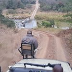 Tracker on game drive