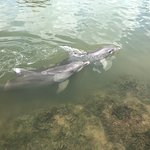 Imagen de Dolphin Research Center