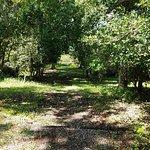 Hampton Plantation State Historic Site의 사진