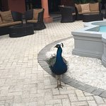 Fine feathered friends at Secrets Wild Orchid.