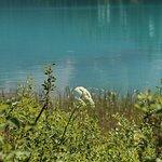 ภาพถ่ายของ Brewster Sightseeing
