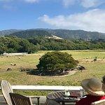 meadows & sheep ;)
