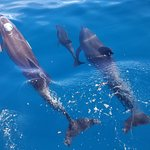 Little baby dolphin!!!!