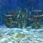 One of the aquarium exhibits