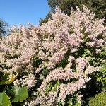 Foto de The Royal Botanic Garden