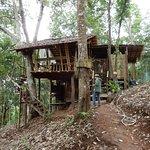 Treehouse Da Nai