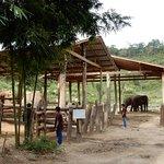 Farewell Blue Tao and elephants