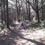 Walking through the pine wood behind Holkam beach