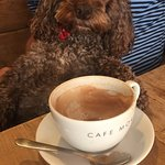 Milo the Cockerpoo loves Cafe Morso