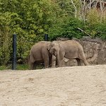 Photo of Dublin Zoo