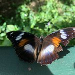 Φωτογραφία: Batchelor Butterfly Farm and Pet Garden