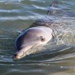 Hello dolphin!