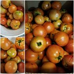 Every summer we get fresh tomatoes from local garden to use and give away when asked, we get ple