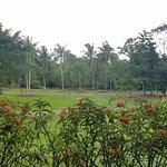 Serene gardens