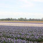 Private fields 10 minute walk away