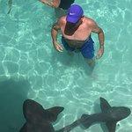 Lively little sharks