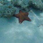 Sea Star at Turtle Beach