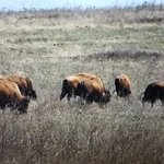 Foto van Tallgrass Prairie Preserve