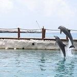 Foto de Dolphin Discovery Costa Maya