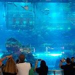 Photo of Dubai Aquarium & Underwater Zoo