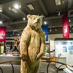 Otto Bear -an 8 foee 9 inces brown bear
