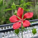 Photo of Magnolia Plantation & Gardens