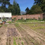 The Lingholm Kitchen & Walled Garden resmi