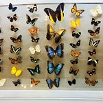 Butterfly collection on display