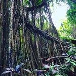 Foto de Sacred Monkey Forest Sanctuary