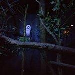 Photo of Taronga Zoo