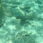 Bild från Playa Porto Mari