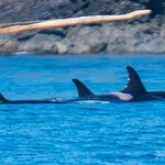 Photo taken during our tour by Ken/Spirit of Orca.