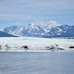 Knik glacier tour