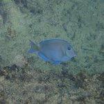 Foto di Eden Rock Diving Center
