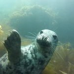 Seal Says Hi