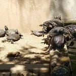 C.R.A.R.C Centre de Recuperacio d'Amfibis i Reptils de Catalunya Photo
