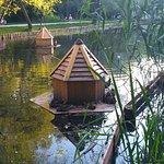 Домики для птиц на пруду