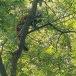 Billede af Zagreb Zoo