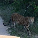 Photo of Roshan Safari