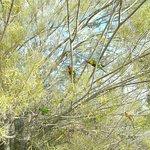 Foto de Parque Dos Reis e Jardim Botânico