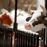 Moo!  We embrace our dairy heritage here in wisconsin, be sure to grab some cheese curds!