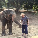 Interaction with elephants